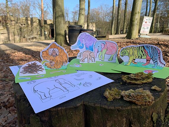 Zoo Osnabruck Elefantenjungtier Yaro