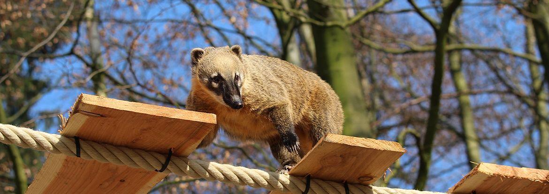 im zoo osnabruck leben etwa 2 660 tiere aus knapp 300 arten